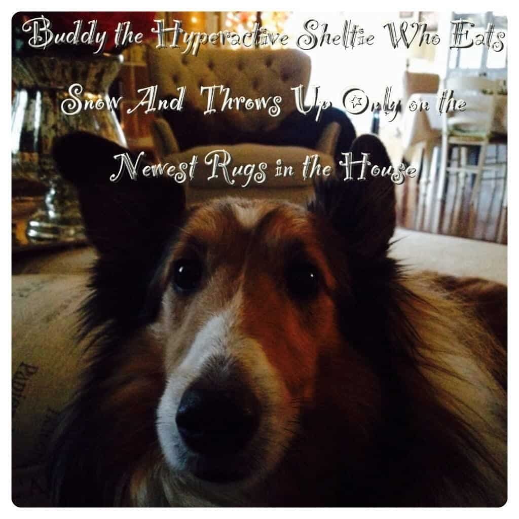 Buddy our dog