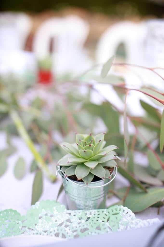 Succulent Wedding Favor in Galvanized Bucket