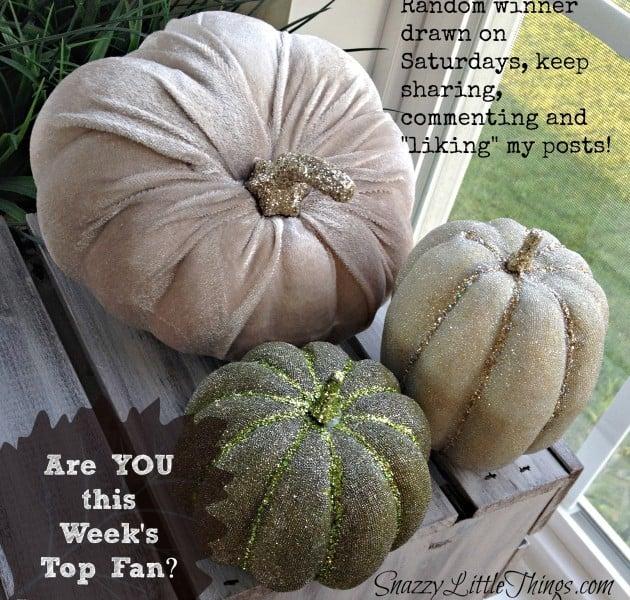 velvet pumpkins giveaway