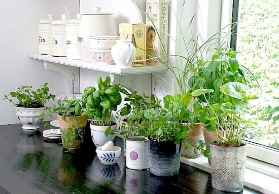 12 Easy Herbs To Grow From Seeds | featured by SnazzyLittleThings.com