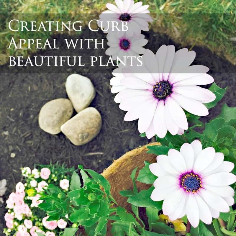 Creating Curb Appeal with Beautiful Plants by SnazzyLittleThings.com
