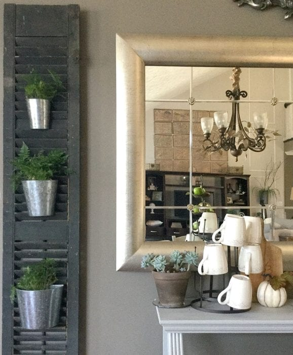 Potted plants on shutter
