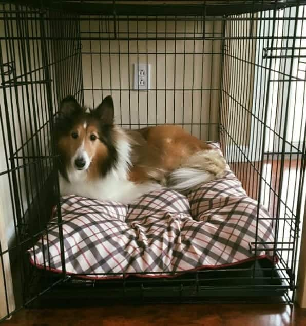 Buddy in his crate, before the build