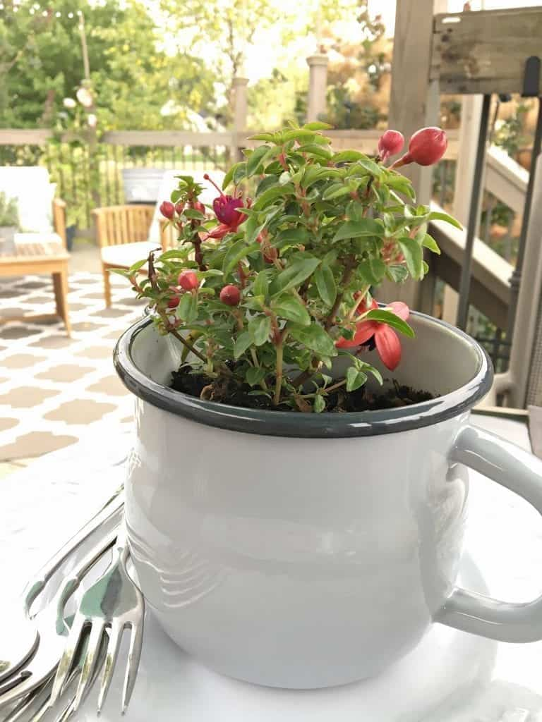 Potted plant on table by SnazzyLittleThings.com