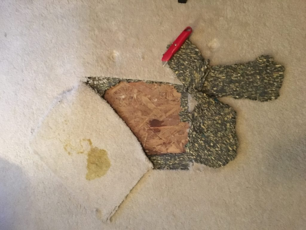 Ripping Up Carpet Dog Pee by SnazzyLittleThings.com