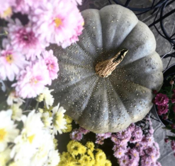 Fall DIY + Decor Ideas
