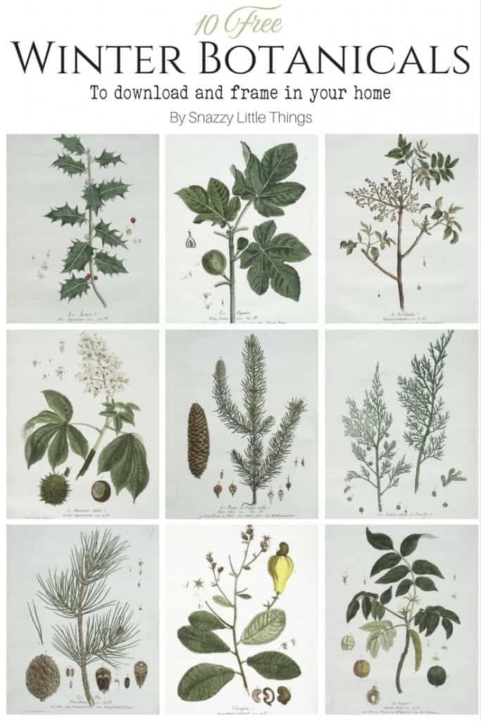 10 Free Winter Botanicals to Download and Frame in Your Home (2)