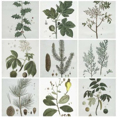10 Free Winter Botanicals to Download and Frame in Your Home by Snazzy Little Things