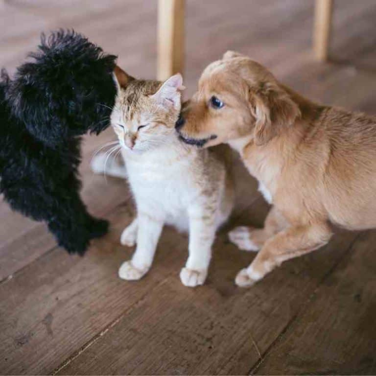 How To Protect Different Flooring Types From Your Pets
